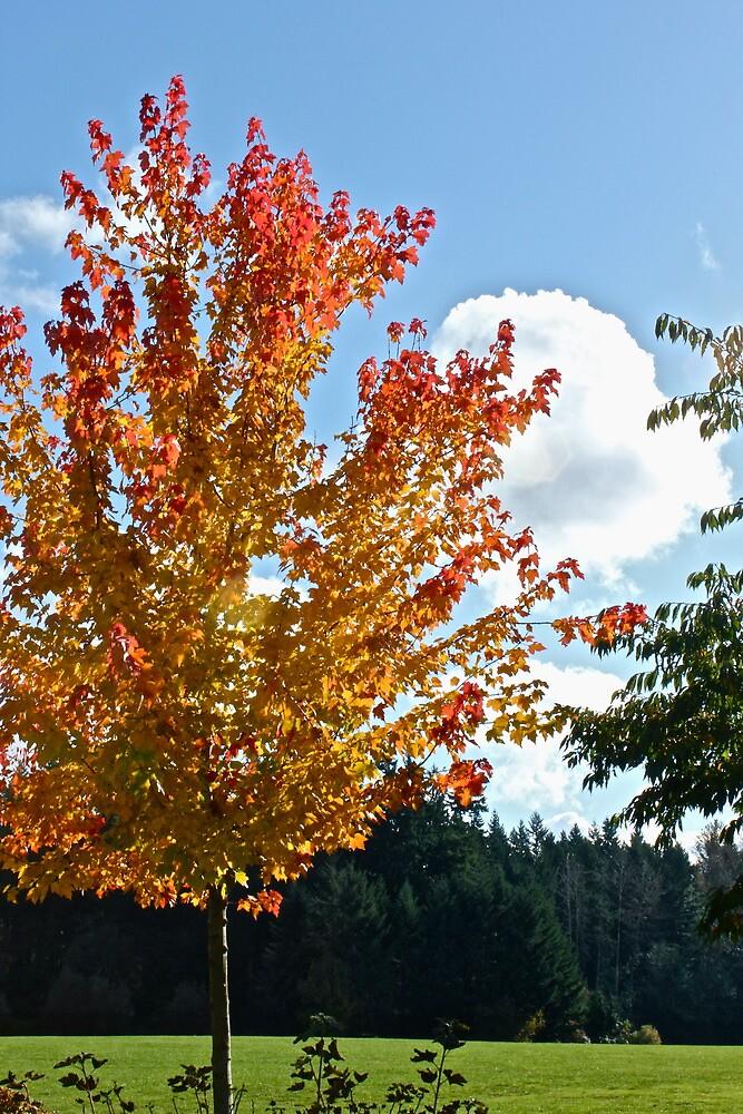 Glorious Fall Wonder by J.K. Sanchez