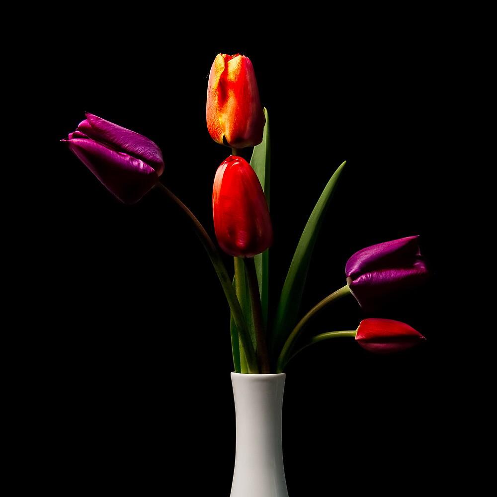 Tulip Study #2 by Bruce Walker