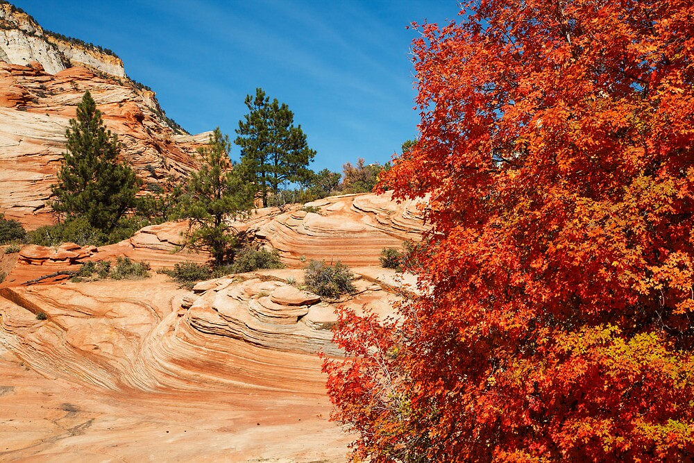 Autumn Colors  by James Marvin Phelps
