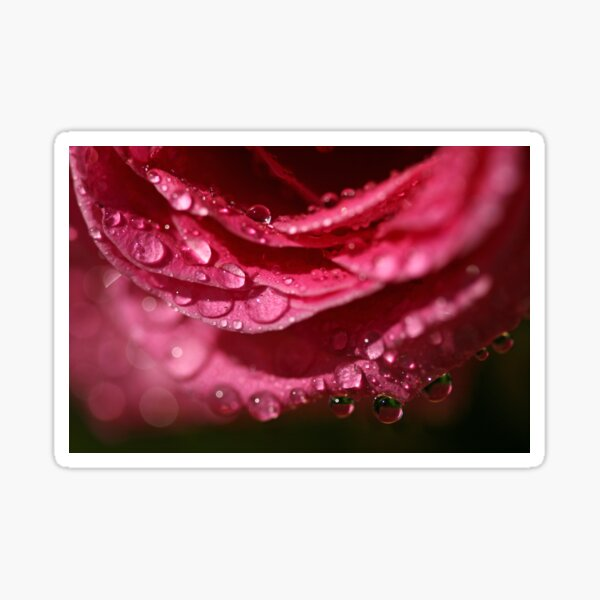 Raindrops on Roses Sticker