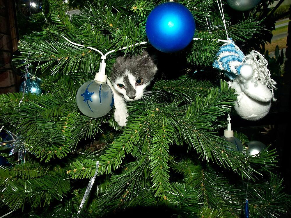 Kitten in a Christmas tree by DBigwood