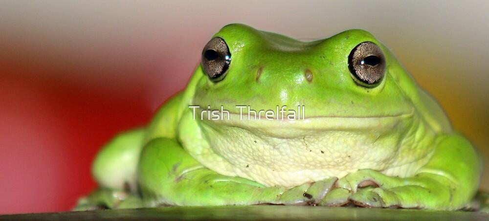 Green Frog  by Trish Threlfall