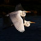 Egrets by Marvin Collins