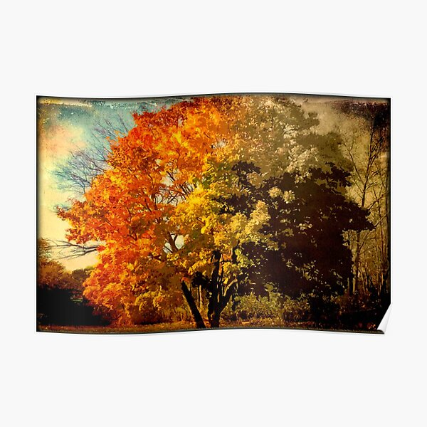 Autumn colors fade away © Poster