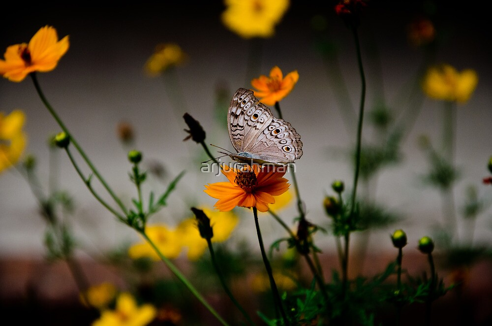 That butterfly by arjurahman