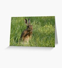 European Brown Hare Greeting Card