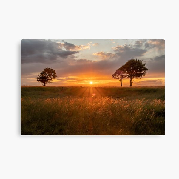 Roundway Hill trees Canvas Print