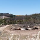 Still removing burned Pine Trees after Sampson Flat Fire! Adelaide Hills. by Rita Blom