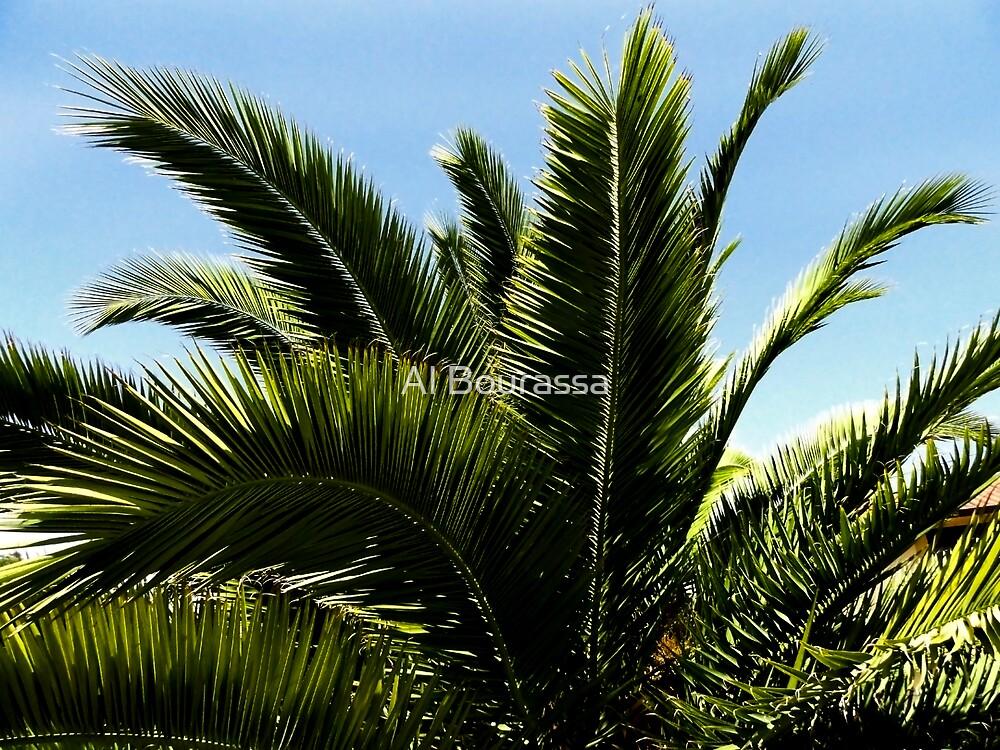 Glorious Palm by Al Bourassa