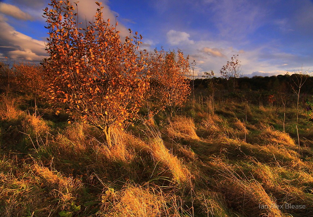November 1st, Late Autumn at Low Coniscliffe by Ian Alex Blease