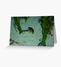 Underwater Life Greeting Card