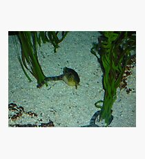 Underwater Life Photographic Print