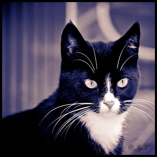 Bikkel the Cat by johnjgt