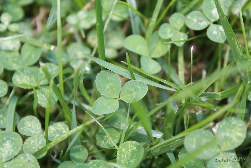 Clovers by Sarah Wolfe