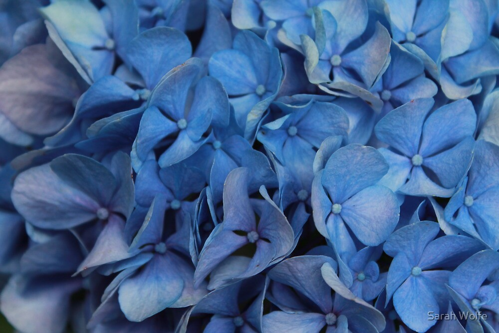More Blue by Sarah Wolfe