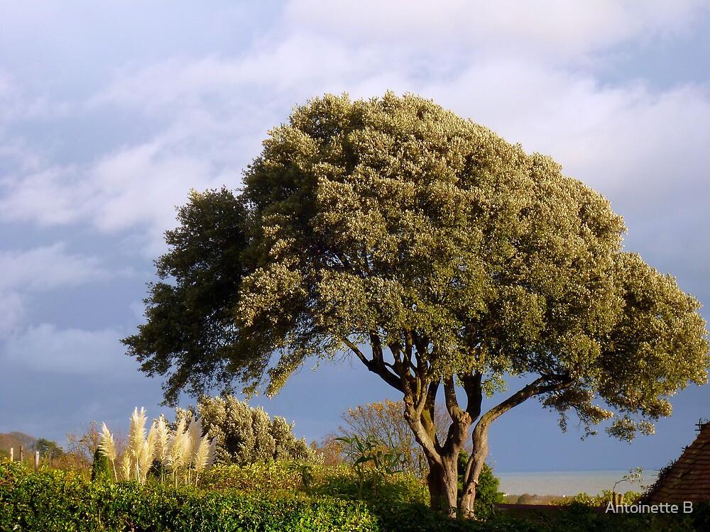 Oak by the sea by Antoinette B