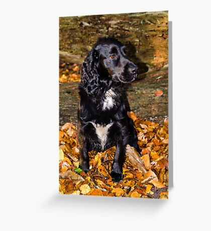 Scooby in Autumn leaves Greeting Card