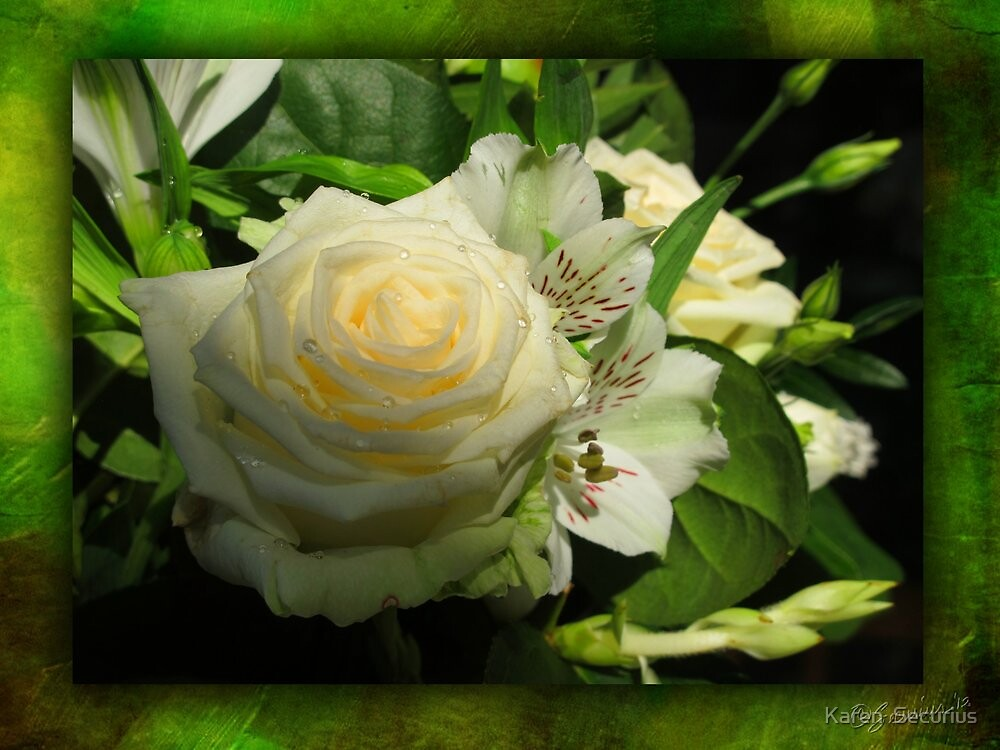white rose 01 by Karen  Securius