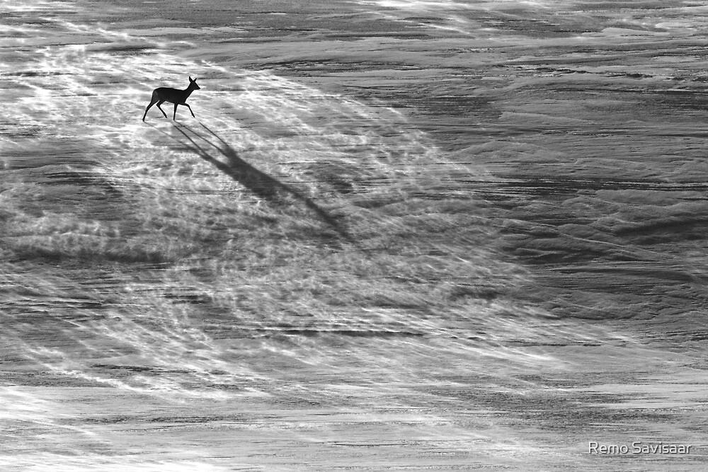 Winter counterpoint by Remo Savisaar