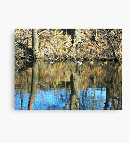 Greenheads on Glass Canvas Print