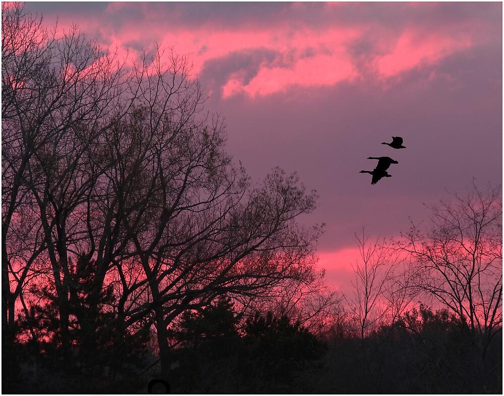Sun Rise by Bill Coughlin