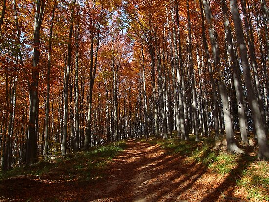 Autumn Forest 4 by MOFS