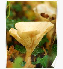 The Common Funnel Cap Mushroom Poster