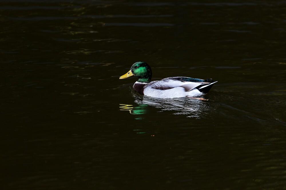 Floating in peace by Edgar Laureano