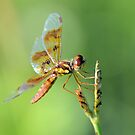 Dragonfly 4 by ©Dawne M. Dunton