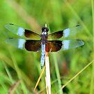 Dragonfly 5 by ©Dawne M. Dunton