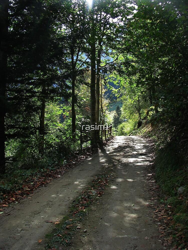 A road in Uzungöl by rasim1