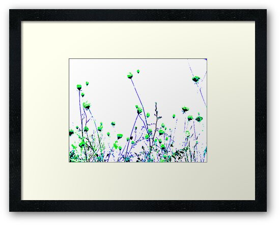 Queen Anne's Lace Field - Green by violinist