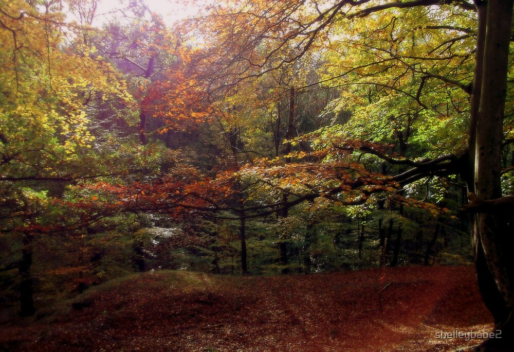 Autumn Trees by shelleybabe2