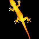 Opportunistic Gecko by Joy Rensch