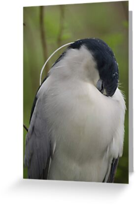 Shy Bird by Chuck Coniglio