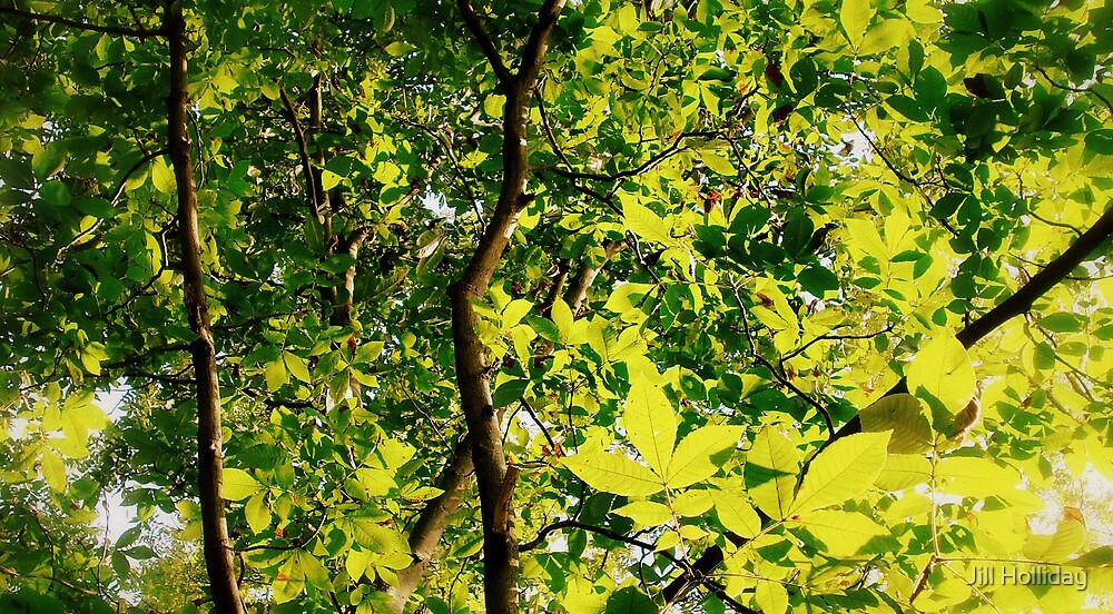 Natural Tree Lighting by Jill Holliday