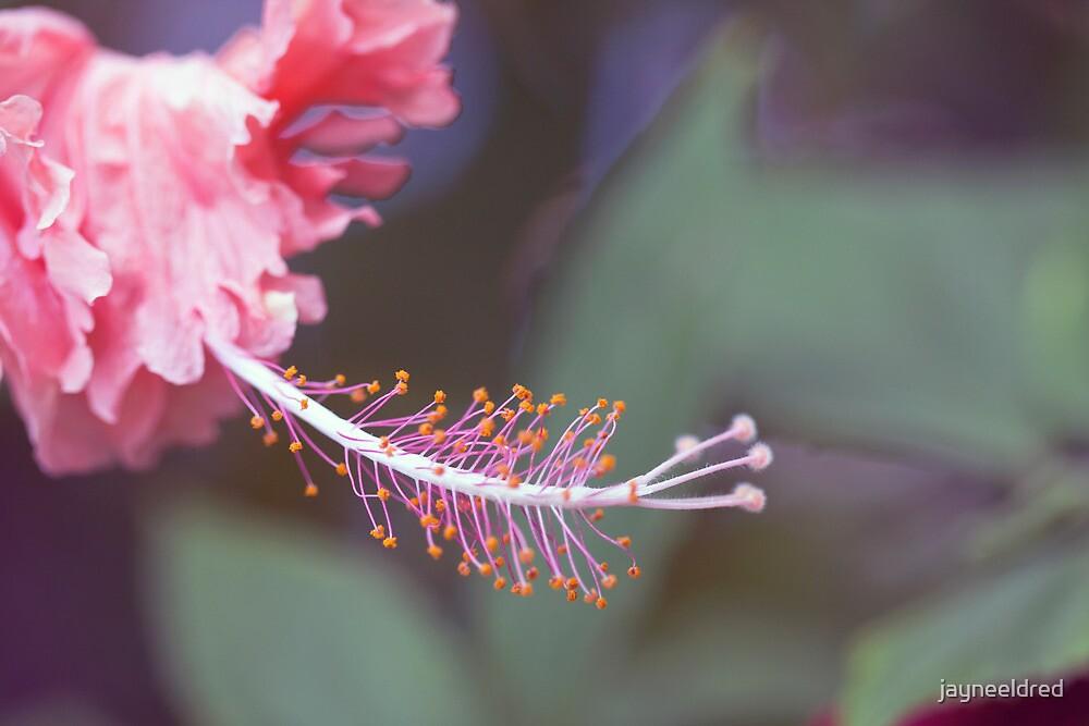Hibiscus Artwork by jayneeldred