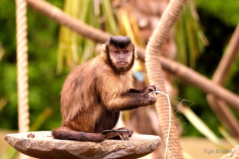Monkey by Kym Bradley