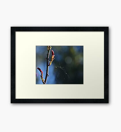 Just another fly in a web Framed Print