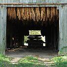 Drying Barn by Thomas Stevens