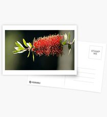 Floral Firework Postcards