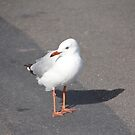 Seagull by knelliec
