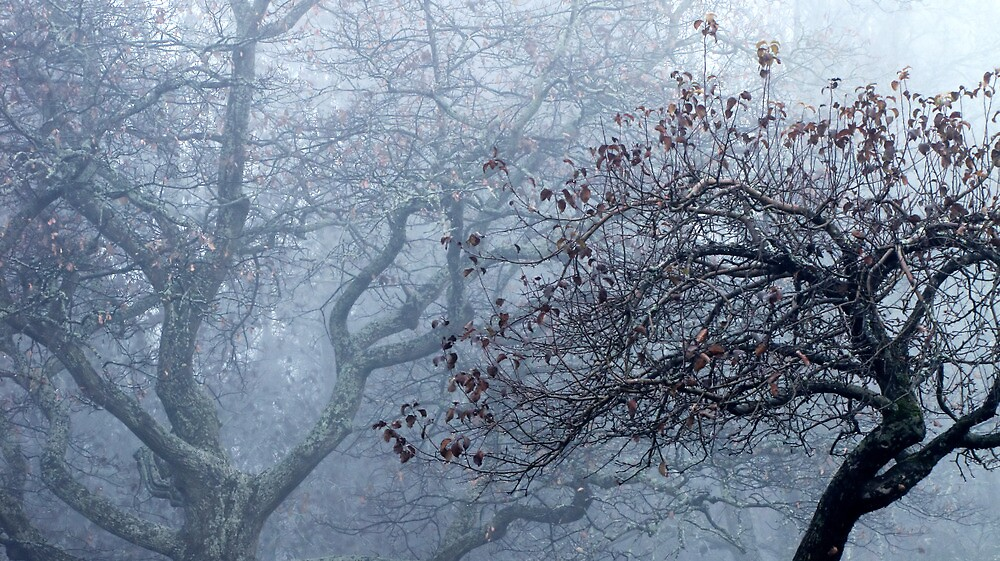 4.11.2012: Apple tree and Oak Tree by Petri Volanen
