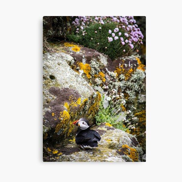 Puffins (III), Lunga Island, Scotland Canvas Print