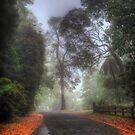 Church Lane - Mt Wilson NSW Australia by Brad Woodman