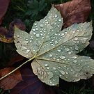 Autumn - Victoria Park by David W Bailey