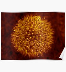 Dandelion Amber Glow Poster