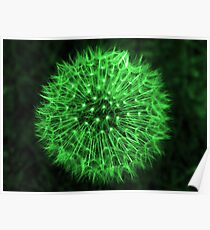 Dandelion Green Poster