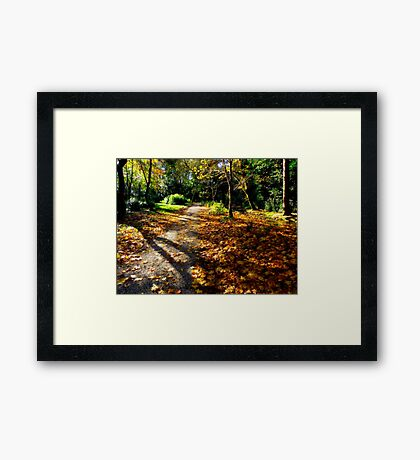 Autumn woodland path. Framed Print