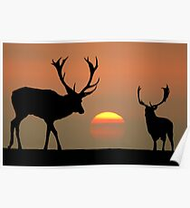 Sunset Stags Poster